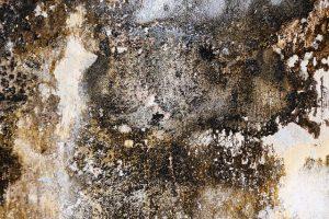 mold damp on walls