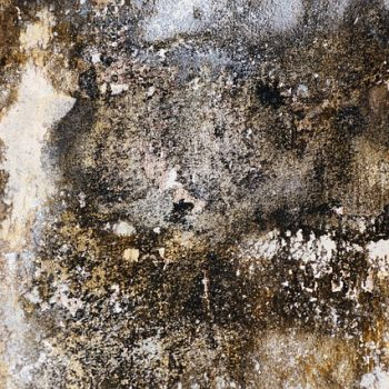 mold damp on walls