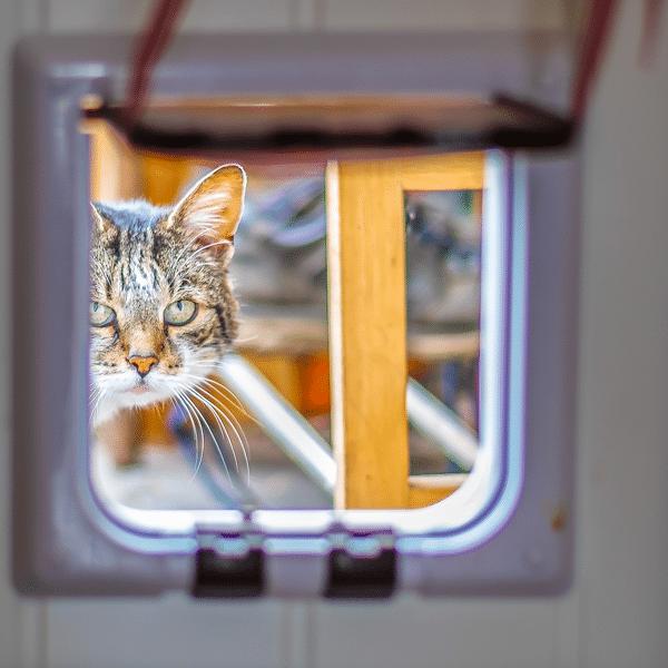 uPVC Door Cat Flap