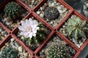 Bathroom Windowsil Cacti