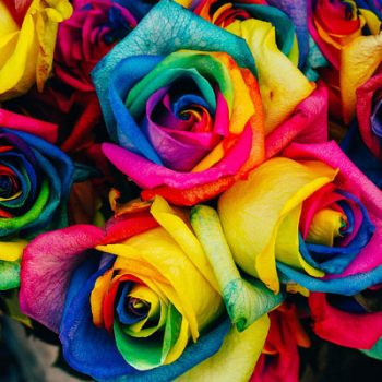 picture of coloured roses